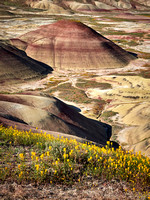 Painted Hills Spring 2017-01