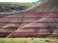 Painted Hills Spring 2017-13