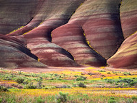 Painted Hills Spring 2017-12